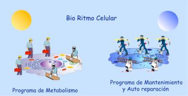Biorritmo-celular