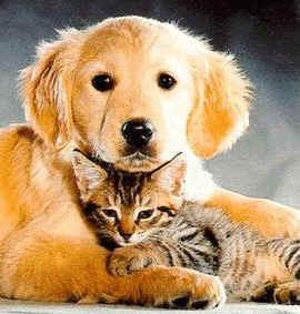 amistad-diferencias