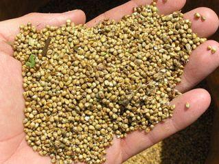 semillas-amaranto-recetas_1_1048222