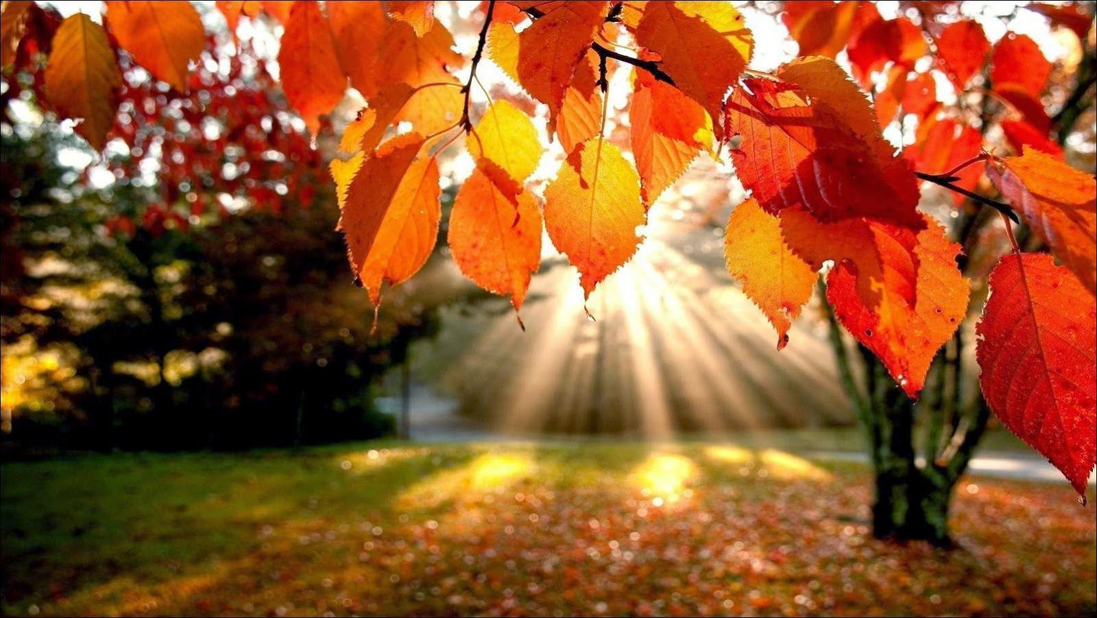 otoño-ojo-seco.jpg